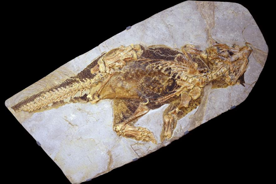 Camo dinosaur fossil stuns scientists