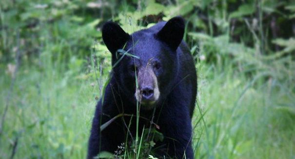 Texas man mauled by vicious mother bear in Alaska