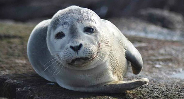 Seals pose minimal threat to Irish fishing stocks