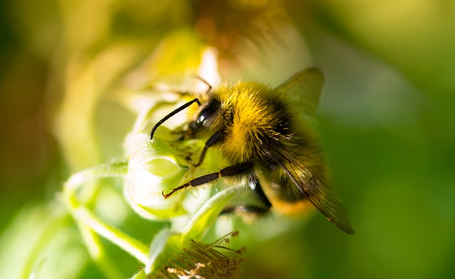 Amazing study: Bees are much more clever than you think