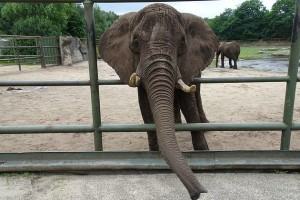 Scientists astonished by huge elephant discovery