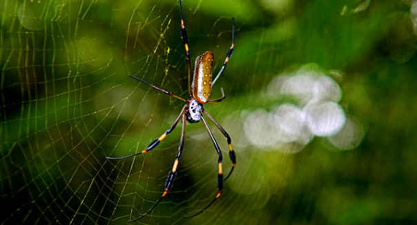 Millions of spiders infest Tennessee neighborhood