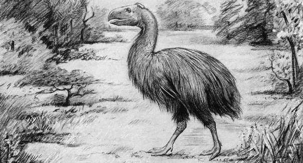 Scientists stunned by massive vegan bird in the Arctic