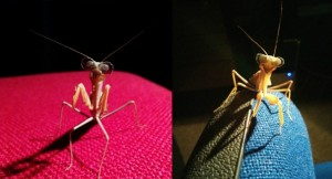 Incredible Praying Mantis discovery stuns scientists