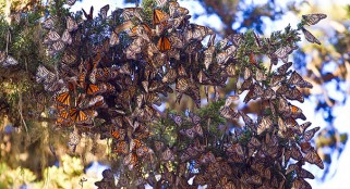 Huge number of bugs reported over Britain