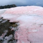 Arctic glaciers melting faster due to red snow algae