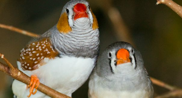 Amazing new bird study reveals evolutionary importance of love