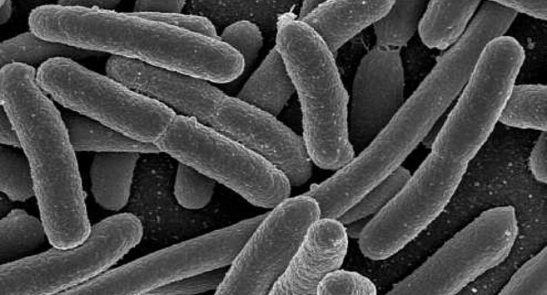 Terrifying flesh-eating bacteria causes panic on Florida coast