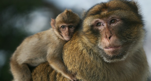 Scientists stunned by strange monkey behavior
