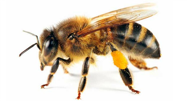 Scientists discover shocking truth about honey bees