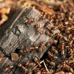 Incredible discovery about ants stuns scientists