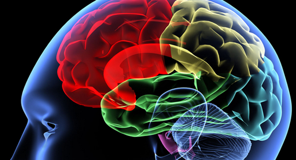 Scientists shocked by the brain's massive memory capacity