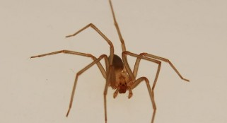 Huge discovery about spiders shocks scientists