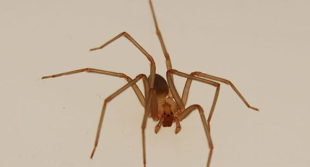 Scientists stunned by huge discovery about spiders for Fishing spider michigan