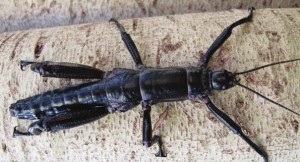 Scientists stunned by discovery of huge bug