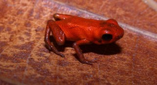 Scientists astonished by this incredible discovery about frogs