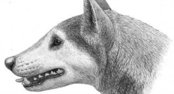 A bizarre, 'bone-crushing' dog once roamed the U.S. East Coast
