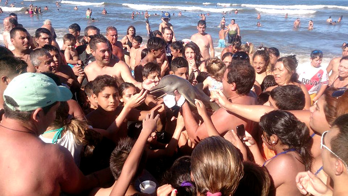 Heartbreaking: Baby dolphin killed as tourists snap selfies