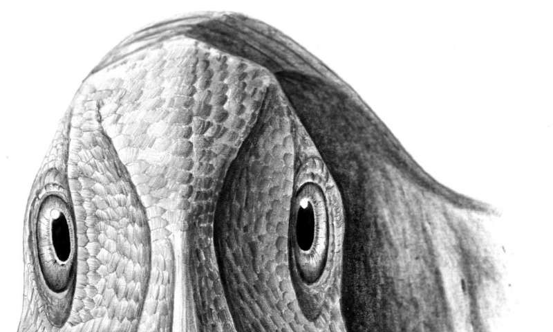 Scientists uncover 69 million-year-old dinosaur tumor