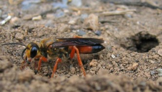 What does a wasp see? You may be surprised