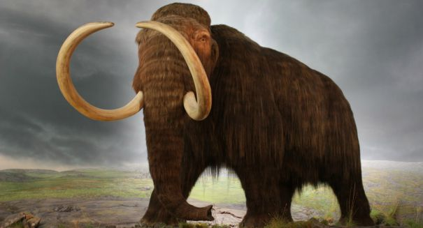 Stunning find: Ice Age mammoth fossil found in new home development