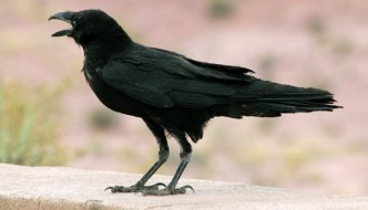 Massive discovery about birds shocks scientists