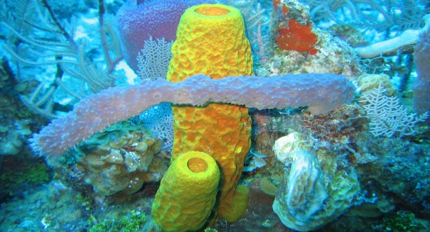 First animals on Earth – Sea sponges?