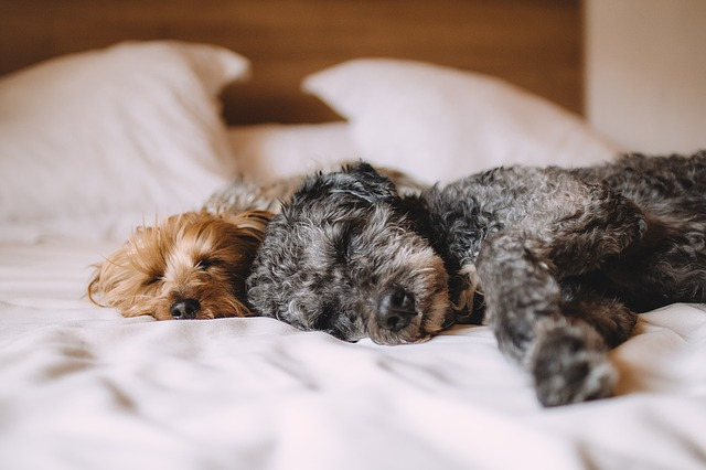 Doggy dreams: Your canine companion is most likely dreaming of you