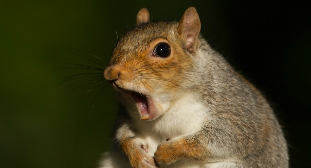 Killer squirrel virus claims three lives, should you be worried?