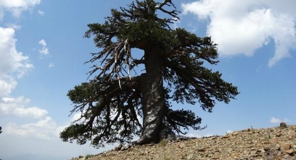 Scientists shocked after finding oldest living thing in Europe